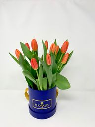 Edicion Blue - 103 Tulipanes
