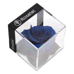 Rosa Preservada En Cubo