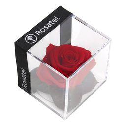 Rosa Roja Preservada En Cubo