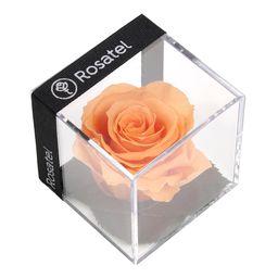 Rosa Melon Preservada En Cubo