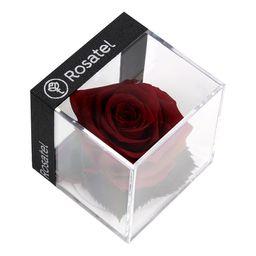 Rosa Rojo Vino Preservada En Cubo