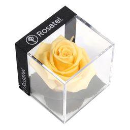 Rosa Amarilla Preservada En Cubo