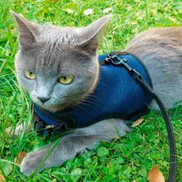 Arnes para gatos ferplast XL
