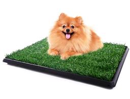 Pet Potty Baño Portátil Con Césped Artificial Perros Pequeño