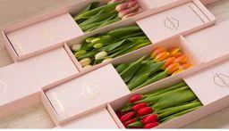 Classic 10 Tulipanes