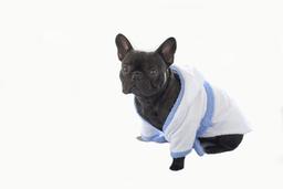 Don Gato Pets Care Bata de Baño Para Perro Bordada (Macho)