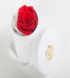 Mini 101 - Rose